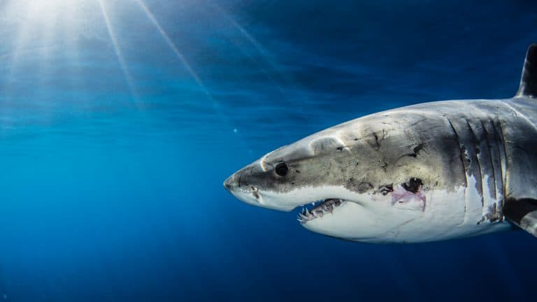 Sharktron Defi Project Devs Exit Scam: Tron Foundation Says Part of Missing Funds Now Frozen