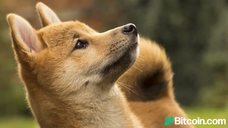 A Mysterious Dogecoin Address Absorbed 27% of the Supply, the Top 20 Addresses Captured 50%